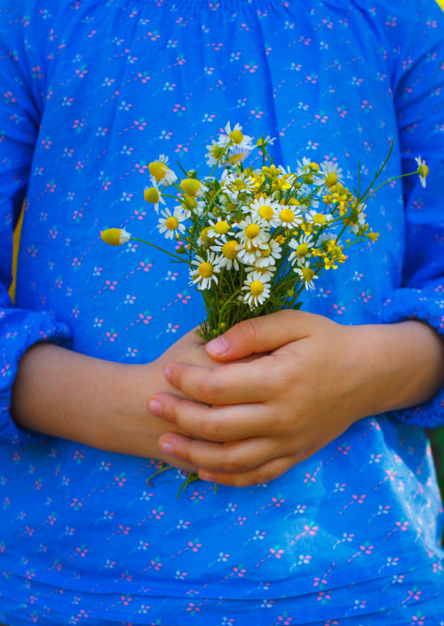 Child hands with camomile flowers