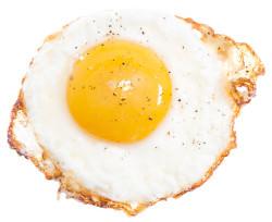 fired egg