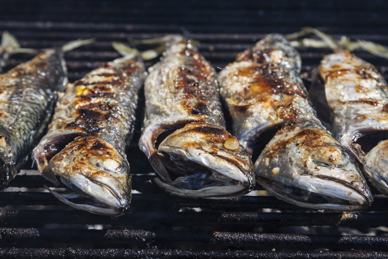 Fresh blue mackerel grilled