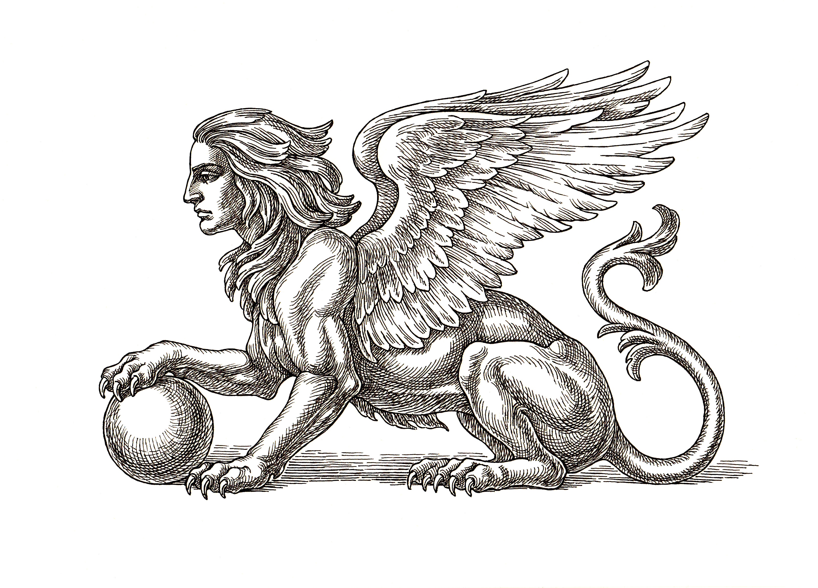 Original ink and pen drawing, winged Sphinx on white background.