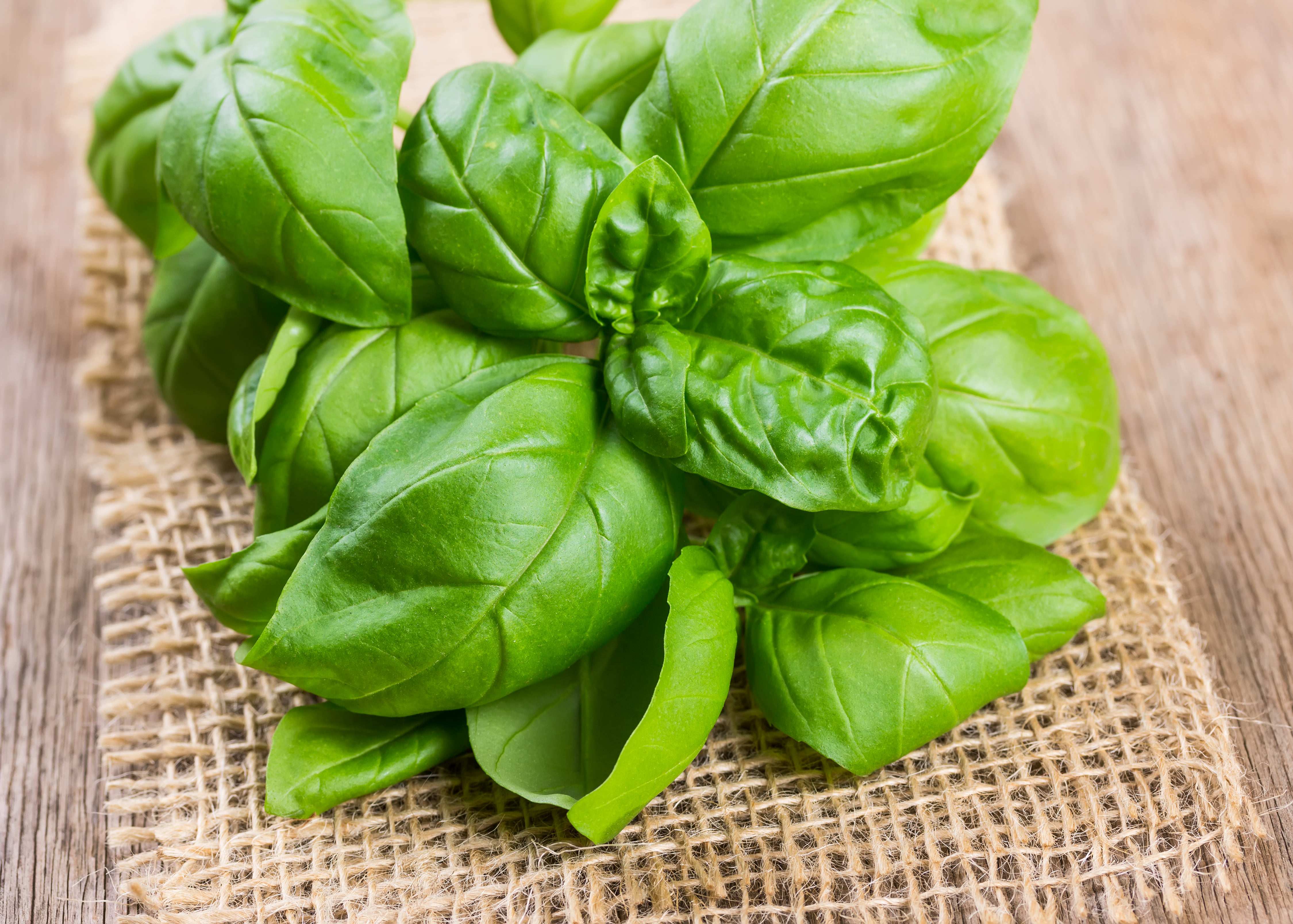 how to use basil in cooking