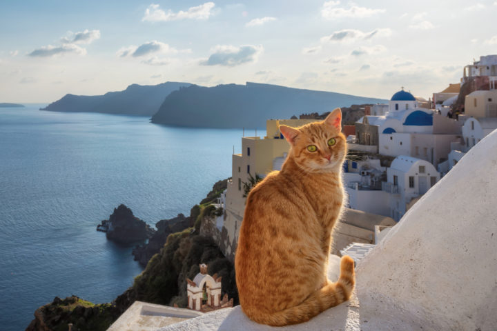Why Cats Walk The Streets of Greece